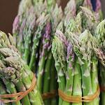Asparagus - Mary Washington-Asparagus - Mary Washington seeds
