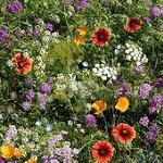 Pollinator Mixtures