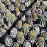 Cacti Seed Mixes