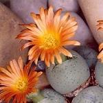Succulent Seed Mixes