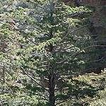 TREE/SHRUB SEEDS (A to Z)