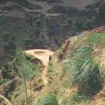 Erosion Control Grass Mixes
