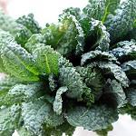 Kale - Lacinato-Kale - Lacinato