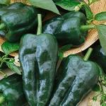 Pepper, Hot - Ancho Grande-Pepper, Hot - Ancho Grande