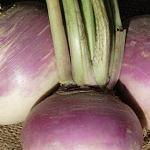 Turnip - Purple Top White Globe-Turnip - Purple Top White Globe